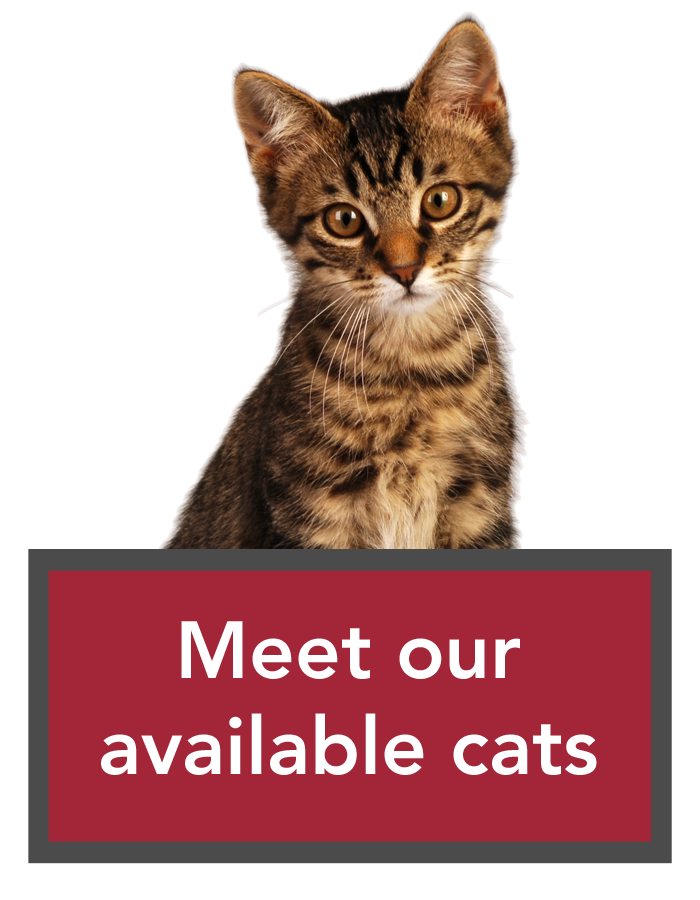 Cats For Adoption In Ottawa